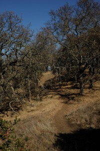 path through the crooked trees